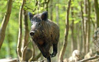 Avviso pubblico – Raccolta firme per la protezione della fauna selvatica e per il prelievo venatorio